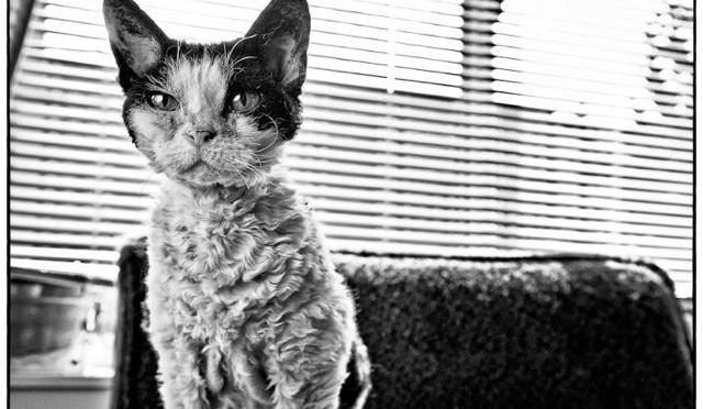 Slinky the wonder cat
